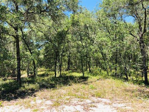 5 Acres 777785 : Morriston : Levy County : Florida