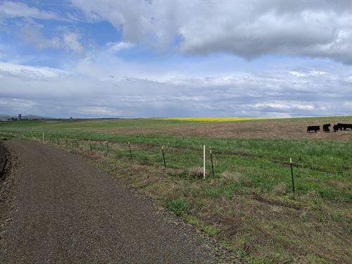 12 Acre Building Lot No Ccr's : Grangeville : Idaho County : Idaho