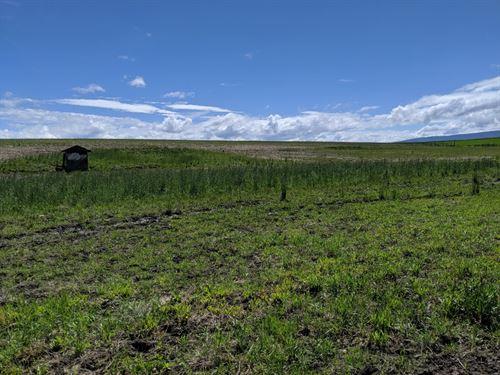 6 Acre Building Lot No Ccr's : Grangeville : Idaho County : Idaho