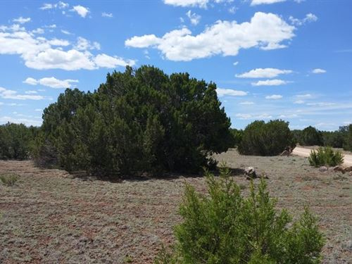 Great Access 1.16 Acre With Trees : Concho : Apache County : Arizona