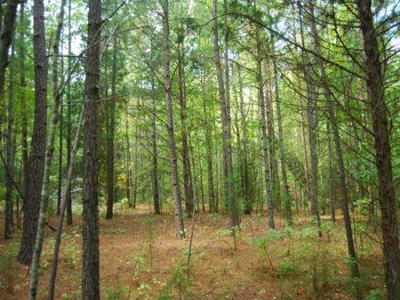 5.01 Acres Near Croft State Park : Spartanburg : South Carolina