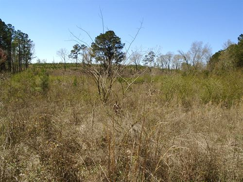 Chesterfield County Sc Acreage : Hartsville : Chesterfield County : South Carolina
