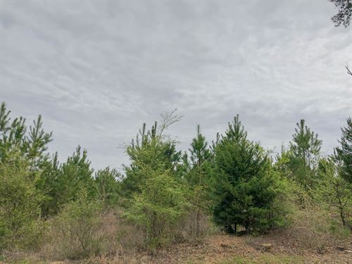 13 Acres Fm 1399 Tract 1010 : Linden : Cass County : Texas