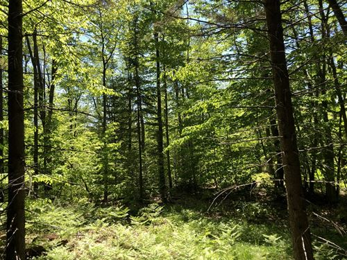 Lewis County Home Or Camp Spot : West Leyden : Lewis County : New York