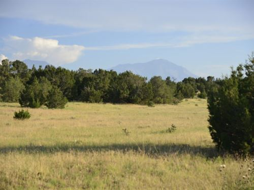 1-Acre Paradise Near Lathrop State : Walsenburg : Huerfano County : Colorado