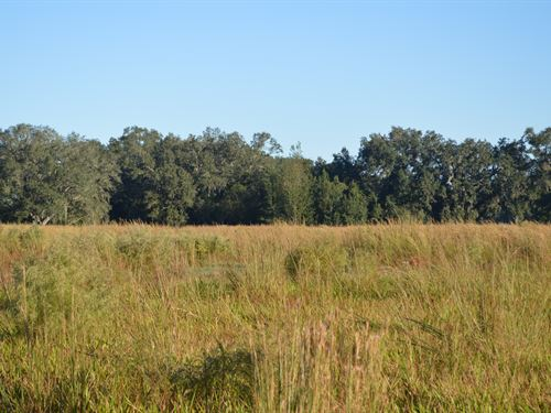 Country Living : Live Oak : Suwannee County : Florida