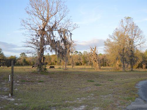 Cleared And Ready : Live Oak : Suwannee County : Florida