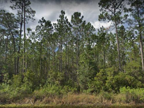 Putnam County, Fl $15,500 : Palatka : Putnam County : Florida