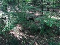 McRees Retreat : Watkinsville : Oconee County : Georgia