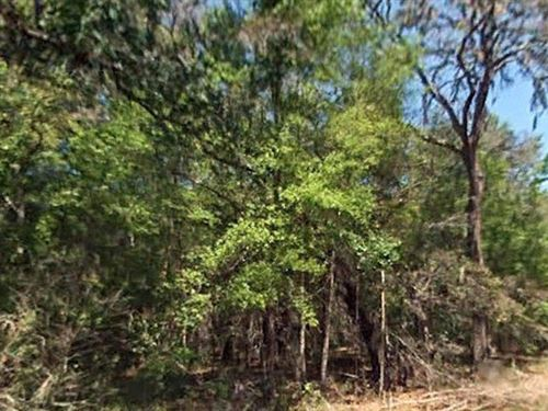 .18 Acre In Ocala National Forest : Fort Mc Coy : Marion County : Florida