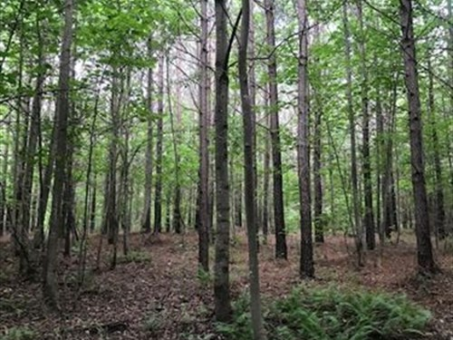 5.49+/- Acs Unrestricted, Electric : Tracy City : Grundy County : Tennessee