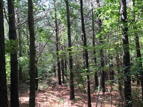 5.93+/- Acs Unrestricted, Electric : Tracy City : Grundy County : Tennessee