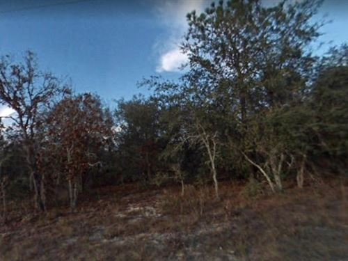 2 Lots Levy County, Fl $30,000 : Williston : Levy County : Florida
