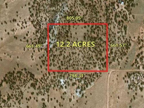 Magnificent Ranchette In Arizon : Snowflake : Navajo County : Arizona