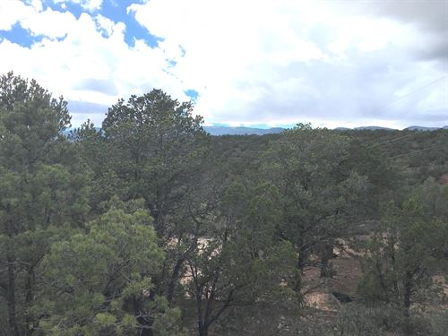 Central NM Wooded Residential Lot : Tijeras : Bernalillo County : New Mexico