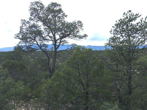 Land Tijeras Canyon NM Bernalillo : Tijeras : Bernalillo County : New Mexico