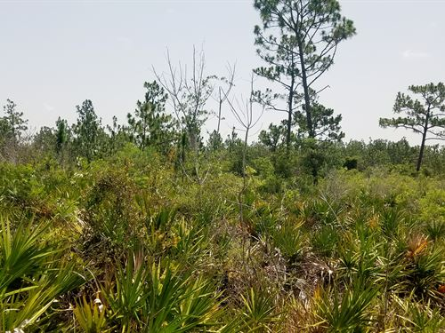 River Ranch Land, 5 Acres : Frostproof : Polk County : Florida