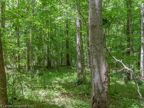 5 Ac, Wooded Homesite In Jonesville : Jonesville : Union County : South Carolina