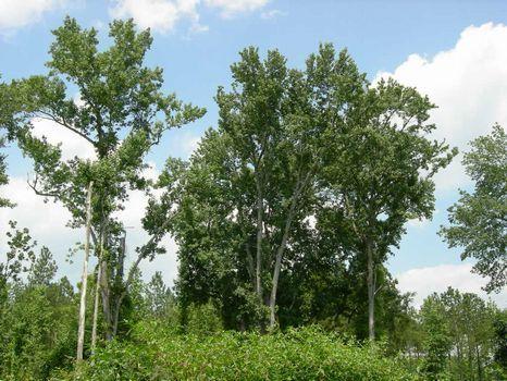 8.229 Acres - New Survey : Swainsboro : Emanuel County : Georgia