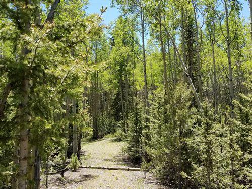 Walk To Fishing : Cripple Creek : Teller County : Colorado