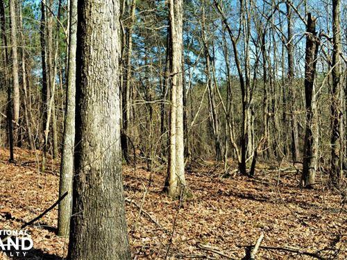 Coaling Timber Investment & Hunting : Coaling : Tuscaloosa County : Alabama