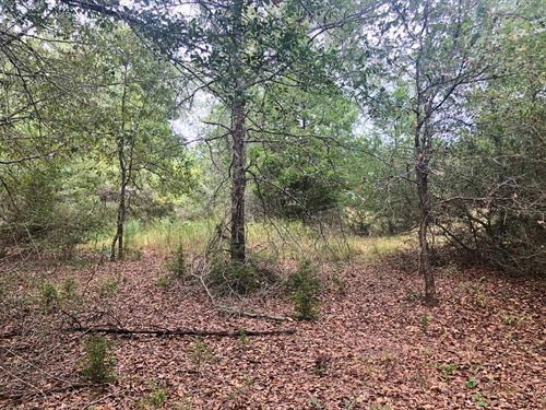 Wooded Land Centerville, Tx, 2.86 : Centerville : Leon County : Texas