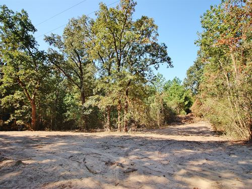 Wooded Acreage Centerville, TX : Centerville : Leon County : Texas