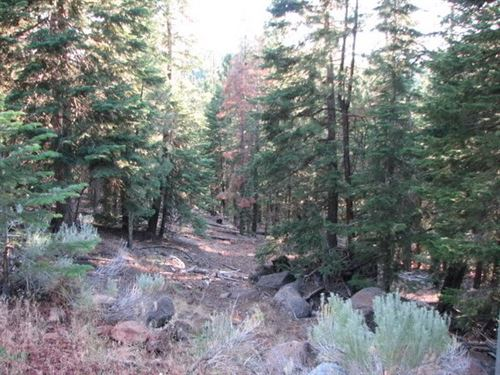 Build Your Dream Home In Alturas : Alturas : Modoc County : California