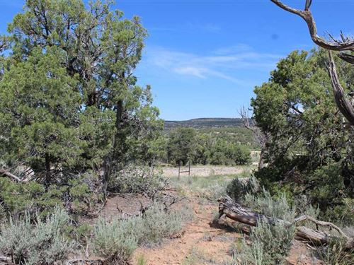 Navajo Lake Vacation Lot Nm511 : Navajo Dam : San Juan County : New Mexico