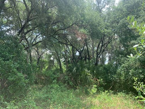 10 Acres With Pond And Views : Hudson : Pasco County : Florida