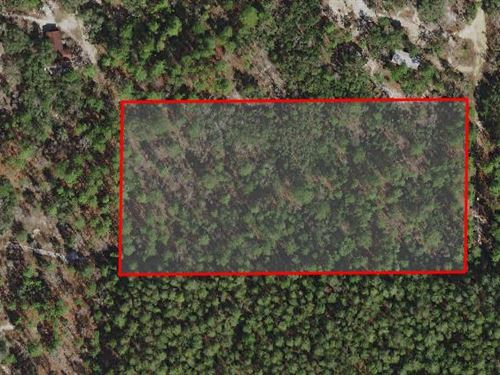 Secluded Lot With Mature Trees : Dunnellon : Citrus County : Florida