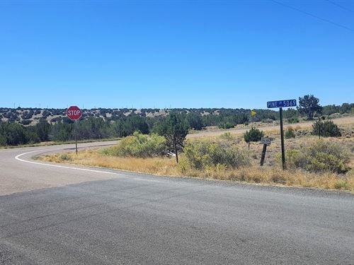 Beautiful Treed Corner Lot-$125 P/M : Concho : Apache County : Arizona