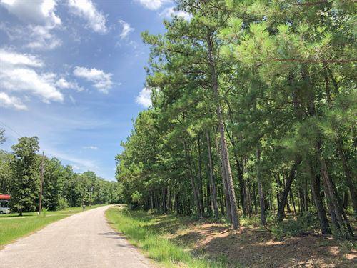 3.08 Acres Erin Dr : Huntsville : Walker County : Texas