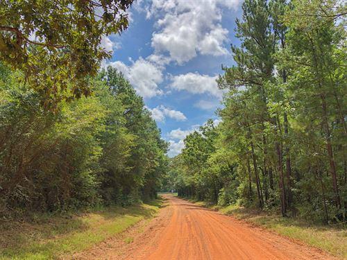 10 Acres Cr 4223 : Jacksonville : Cherokee County : Texas