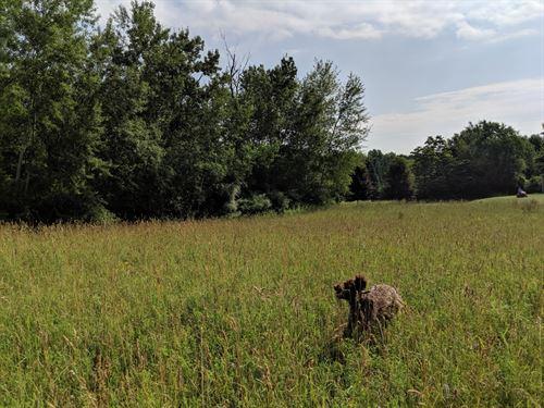 Country Acreage : Sand Lake : Newaygo County : Michigan