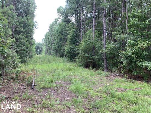 Hwy 441 Timber Property Near Hammon : Holden : Livingston Parish : Louisiana
