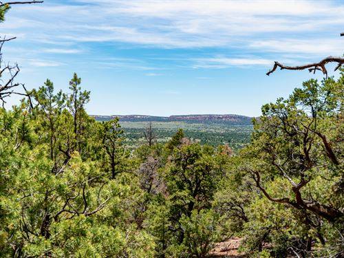 Wooded Mountain Acres With Electric : Ramah : Cibola County : New Mexico