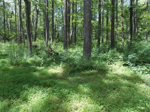 Secluded Wooded Lot Franklin County : Copper Hill : Floyd County : Virginia