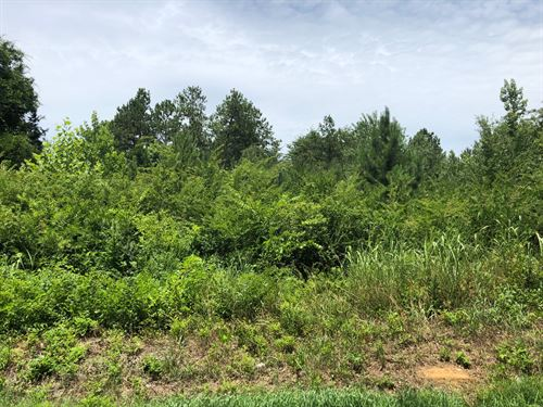 8.37+/- Ac Wooded Trk1 Euharlee Rd : Taylorsville : Bartow County : Georgia