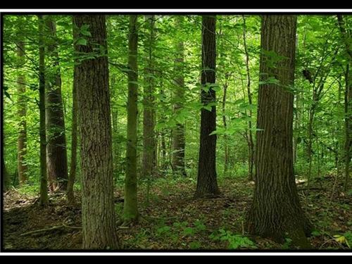 Tract 12 At The Woods At High Hill : Chandlersville : Muskingum County : Ohio
