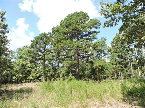 Wooded Timber Land Acreage Bull : Harrison : Marion County : Arkansas