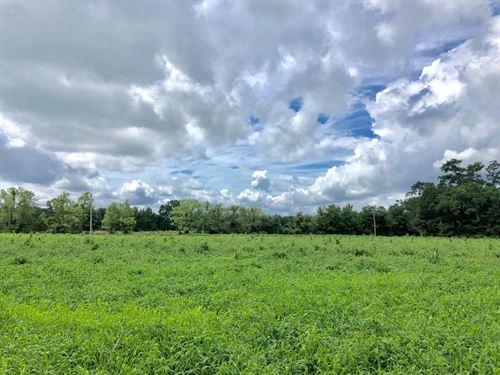 Vacant Land Alachua County, Florida : Alachua : Florida