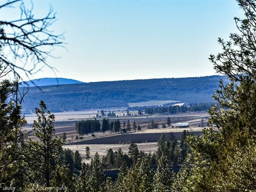 Spend Summer Among Trees In Oregon : Bonanza : Klamath County : Oregon
