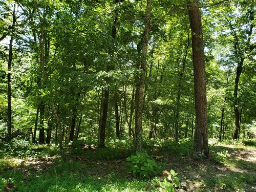 1 Acre Wooded Building Lot : Mooresburg : Hawkins County : Tennessee