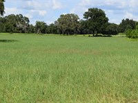 Owner Finance 20 Ac Lake Access : Brooksville : Hernando County : Florida