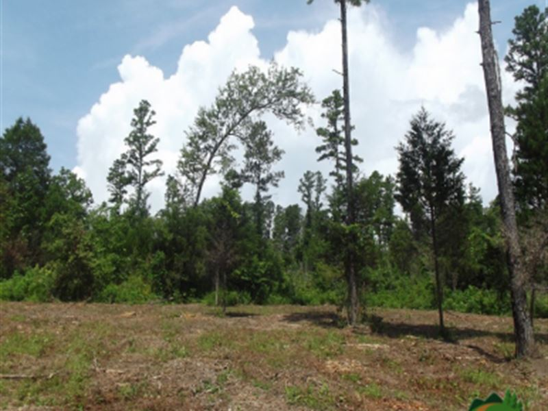Private Acreage, Large Clearing : Drury : Ozark County : Missouri