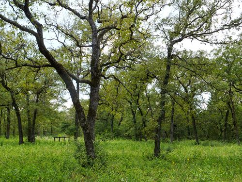 5 Acres With Cabin : Rockdale : Milam County : Texas