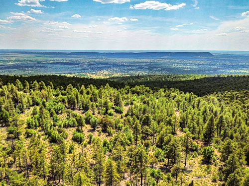 Financing Borders National Forest : Ramah : Cibola County : New Mexico