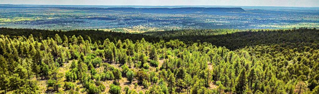 Wooded Lot Borders National Forest : Ramah : Cibola County : New Mexico