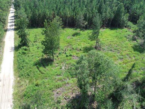 4.22 Acres Tract B2 Land For Sale : Kingsland : Camden County : Georgia